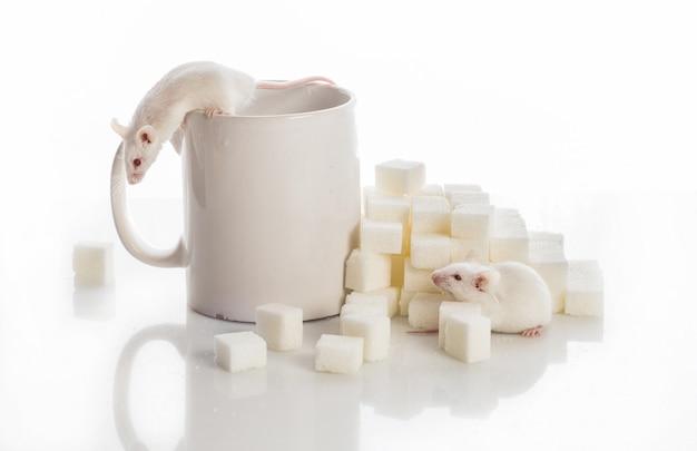 砂糖キューブとカップ、糖尿病のコンセプトから階段を這う2匹の白いマウス