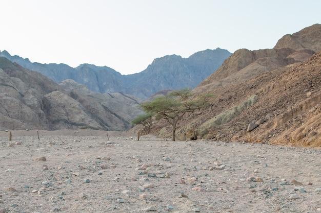 砂漠、赤い山、岩、2本の木。エジプト、シナイ半島。
