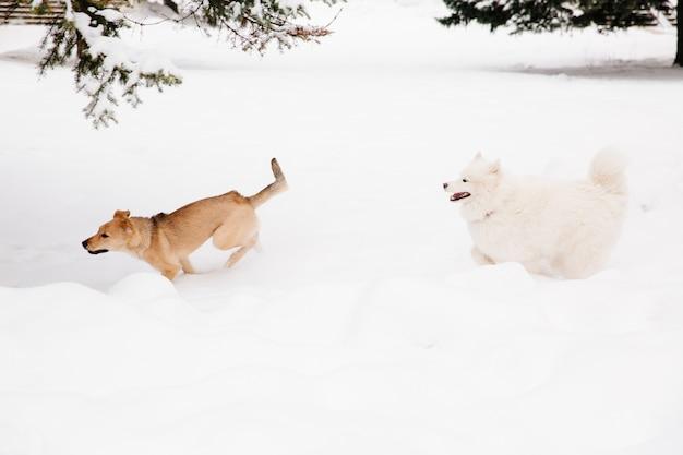 2匹の犬が森の中の雪の上を走っています。犬を遊ぶ