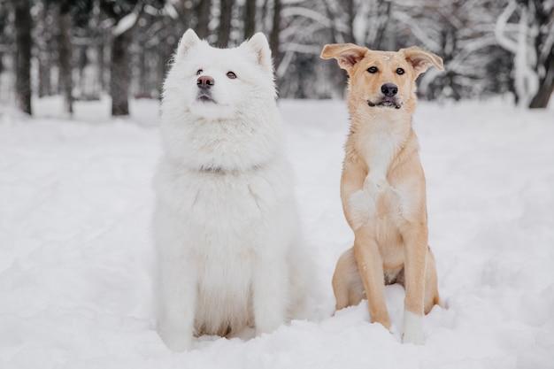 森の中の雪の上に座っている2つの面白い犬
