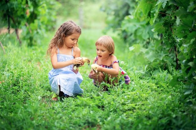夏のサンドレスの2人の女の子の姉妹が座って、農場で小さなアヒルの子と草で遊ぶ