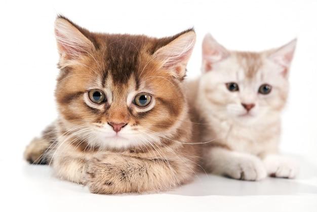 2匹の子猫のクローズアップ。