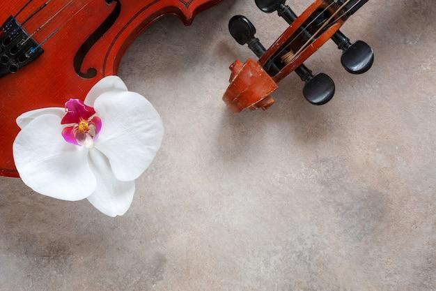 2つの古いバイオリンと白い蘭の花。上面図、光のコンクリートの背景にクローズアップ