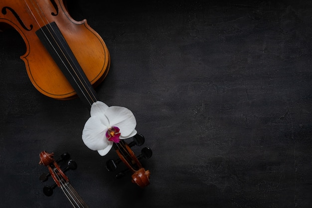 2つの古いバイオリンと白い蘭の花。トップビュー、暗いコンクリートの背景にクローズアップ