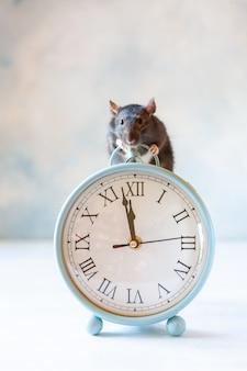 かわいい小さな黒いラット、マウスはヴィンテージ時計に座っています。ラットの新年まで2分。中国の旧正月のシンボル