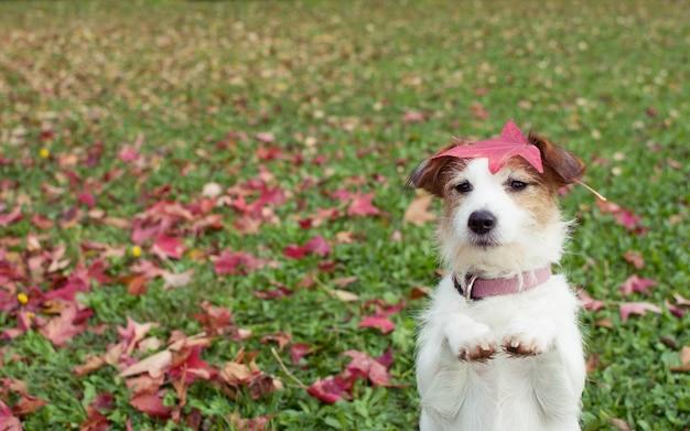 ジャックラッセルの子犬は2本の足の上に立って祈りのジェスチャーの上に立つ