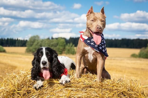 干し草の山で2匹の犬