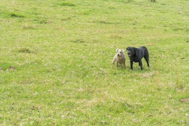 地平線を見ながら座っている2匹の犬