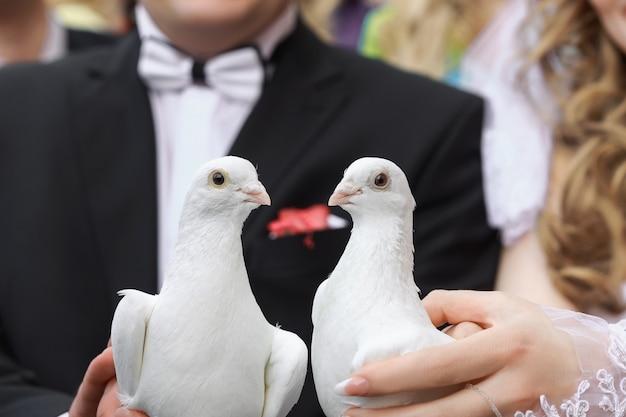 2つの白い鳩