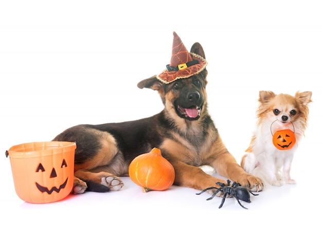 2匹の犬とハロウィーン
