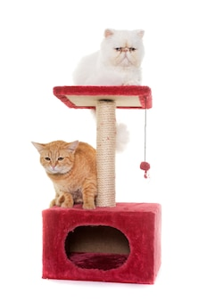 スクラッチポストに2匹の猫