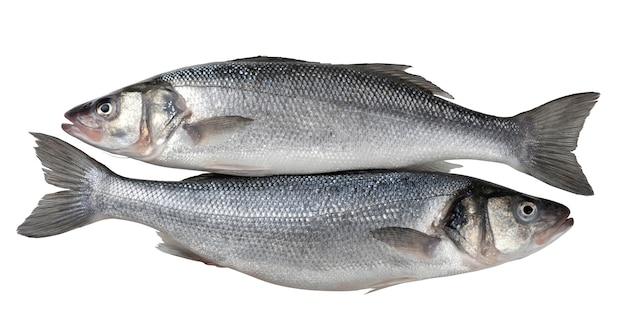 白で隔離される2つの新鮮なシーバス魚