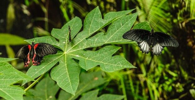 2匹の蝶と庭の花