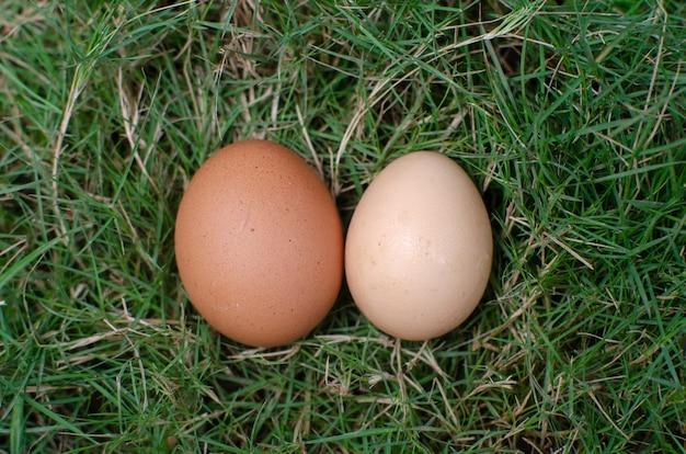草の上の2つの卵