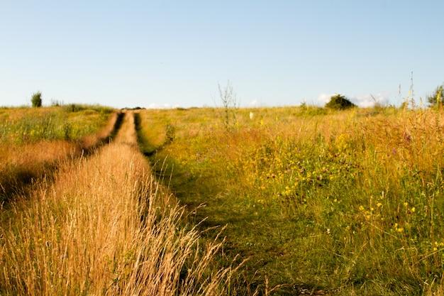 草が茂る草原の2トラックの未舗装の道路