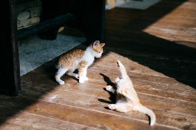 2つの遊ぶ子猫