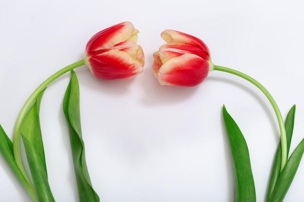 布の背景に2つの咲く赤いチューリップの花。上からの眺め