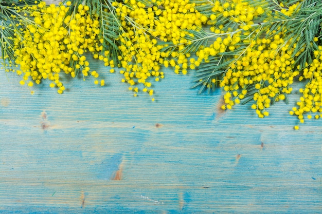 青い木製の背景にミモザの花。 3月8日、女性の日のシンボルと春。