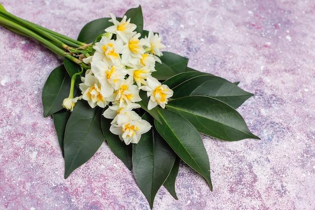 黄色の白い水仙、水仙、明るい背景にジョンキル花。3月8日女性の日。