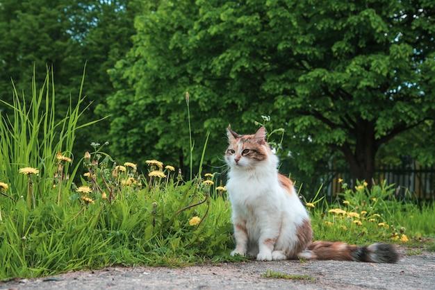 3色の猫は夏の自然の緑の芝生に座っています。