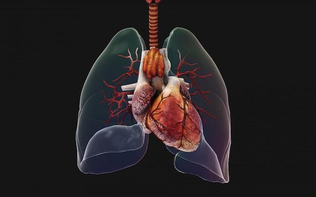 3 dイラストレーション人間の肺と呼吸器系。中国イラストコンセプトのncov。