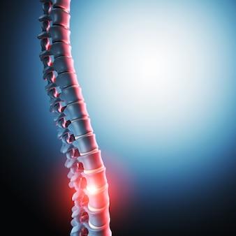 人間の脊椎骨3 d