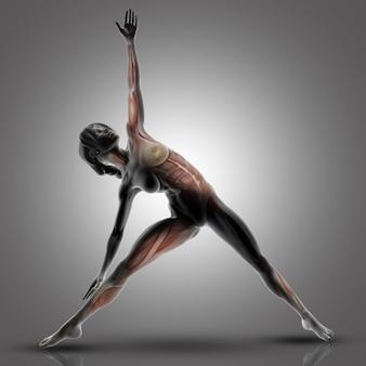 使用されている筋肉が強調表示された三角形のヨガのポーズの3 d女性像