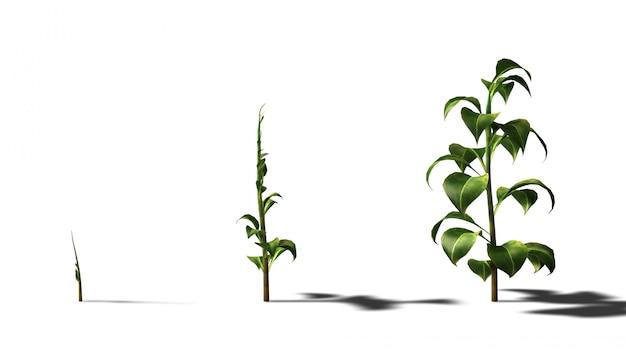 成長する植物の3 dレンダリング