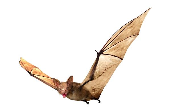 ハロウィーンの装飾、3 dレンダリングのために分離された飛行の吸血コウモリ