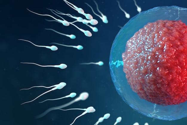 3 dイラストの精子と卵細胞、卵子。精子が卵細胞に近づいています。ネイティブおよび自然受精。新しい人生の始まりの構想。顕微鏡下の赤いコアの卵子、運動精子
