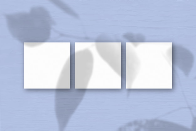 3 квадратных листа белой текстурированной бумаги на синем фоне стены. наложение мокапа с тенями растений. естественный свет отбрасывает тени от экзотического растения. плоский вид, вид сверху. горизонтальная ориентация