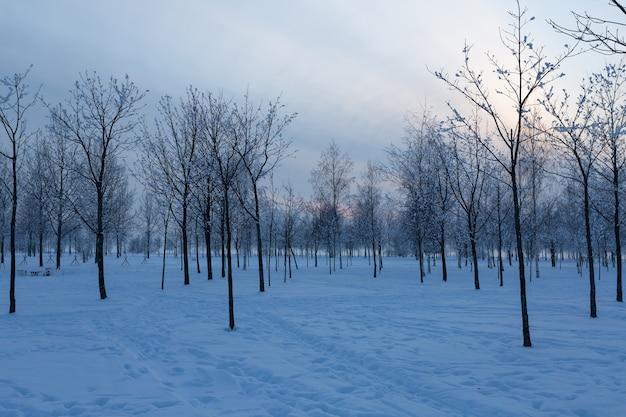 겨울 저녁에 러시아 상트 페테르부르크의 300 년 공원.