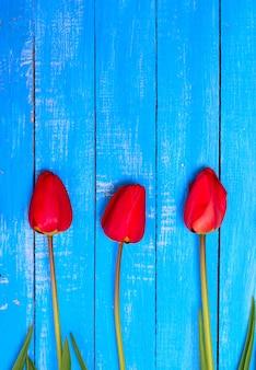 3つの咲く赤いチューリップ