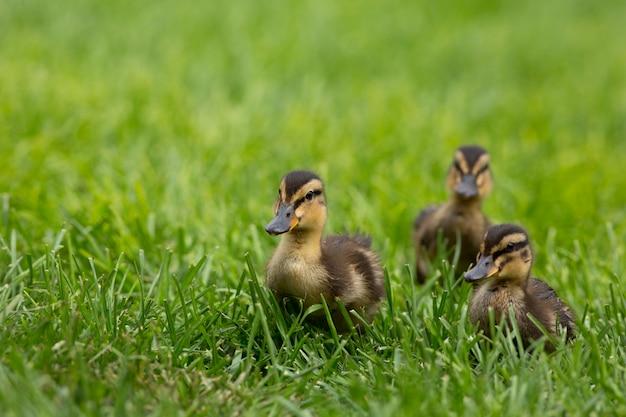 春の3羽のひな