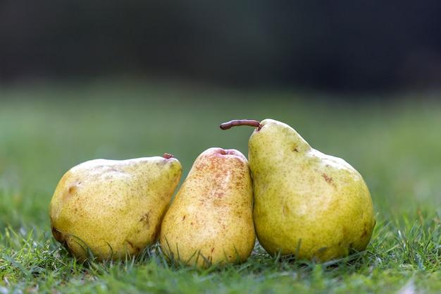 新鮮な草の3つの黄色の梨の組成は、濃い緑色のぼやけたコピースペースをぼやけています。