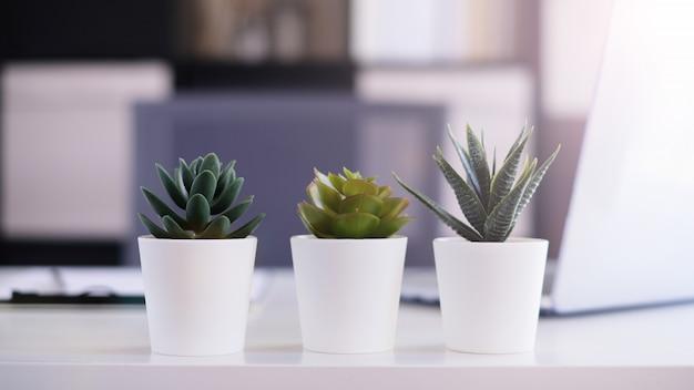 3つの植木鉢でモダンなオフィス作業スペースの装飾。