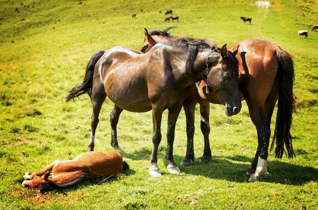 山の中の3頭の馬