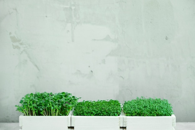 マイクログリーンの3つの白い木箱