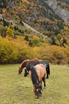 山で放牧されている3頭の馬