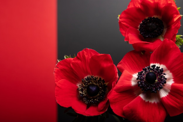 白い背景の上の3つの赤いアネモネの花