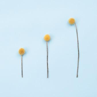3つのオレンジ色の素朴な花の正方形の画像はテーブルにあります。コピースペース