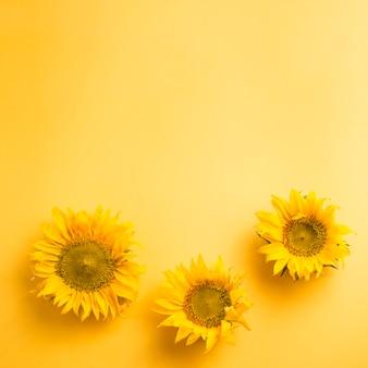 空の黄色の背景に3つのひまわりの頭