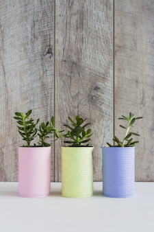 木製の壁の白い机の上に3つの塗装されたリサイクル缶の新鮮な栽培植物