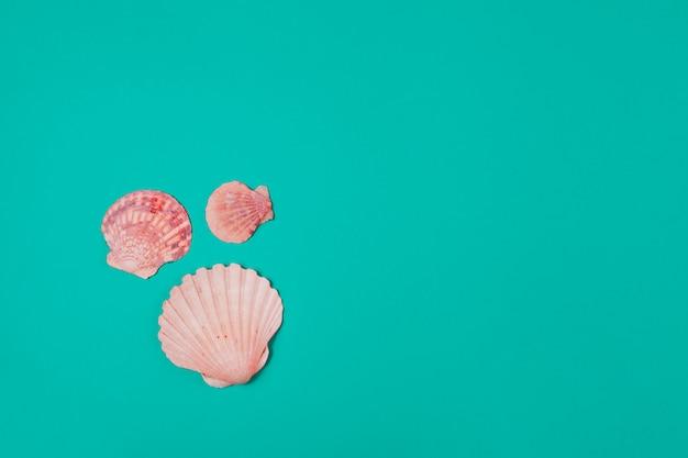 ターコイズブルーの背景に3つのホタテ貝殻