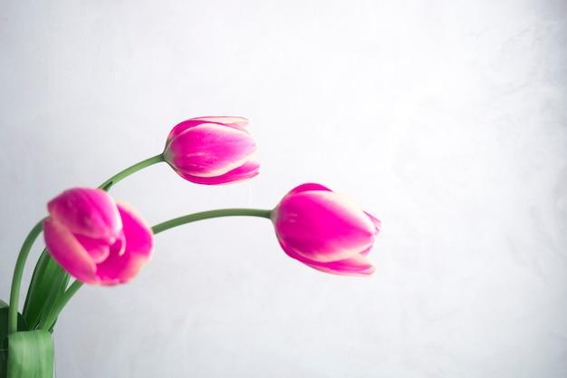 白い背景の上の3つのピンクのチューリップ