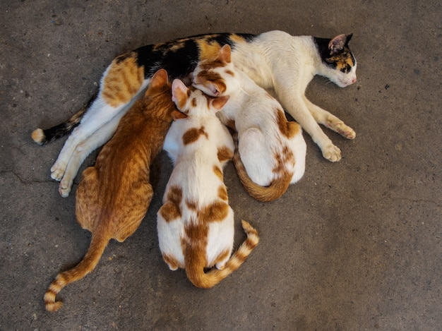 3匹の子猫と母親の猫が床に
