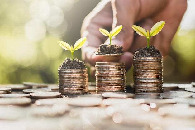 3つのコインが積み重ねられ、苗木が上に成長しています。これは、金融の成長という概念です。