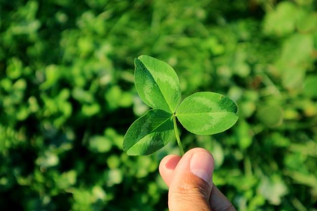 背景のぼやけたクローバーフィールドと手で緑の3つ葉のクローバー