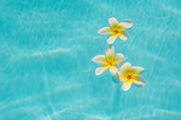 プールの背景の水に3つの白いプルメリアの花