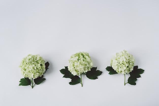 白い背景の上に横たわる葉を持つ3つの緑の花